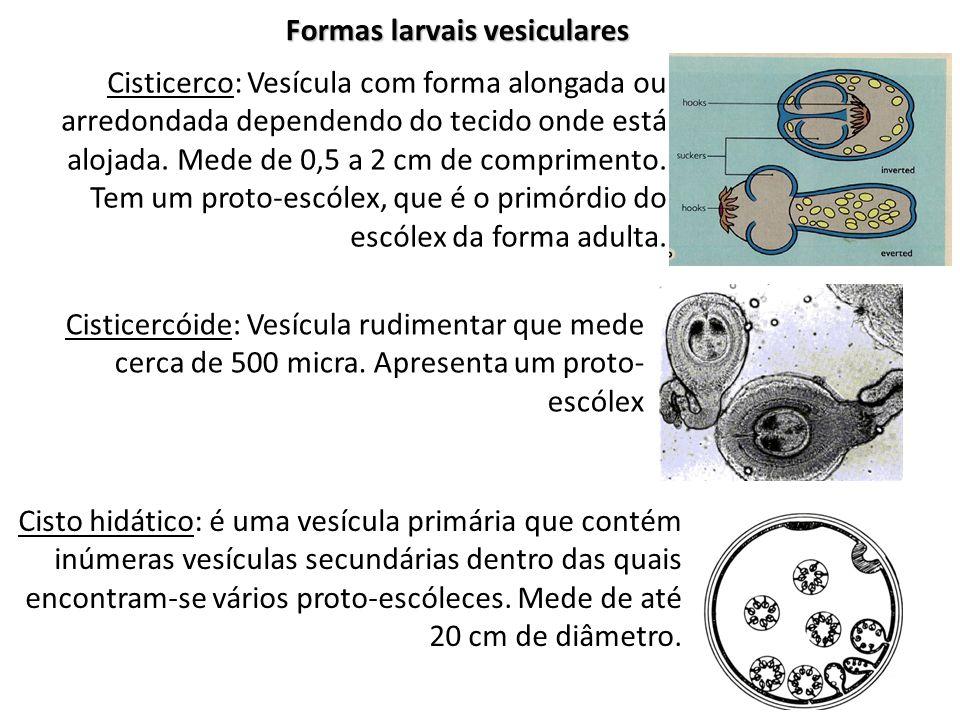 Formas larvais vesiculares