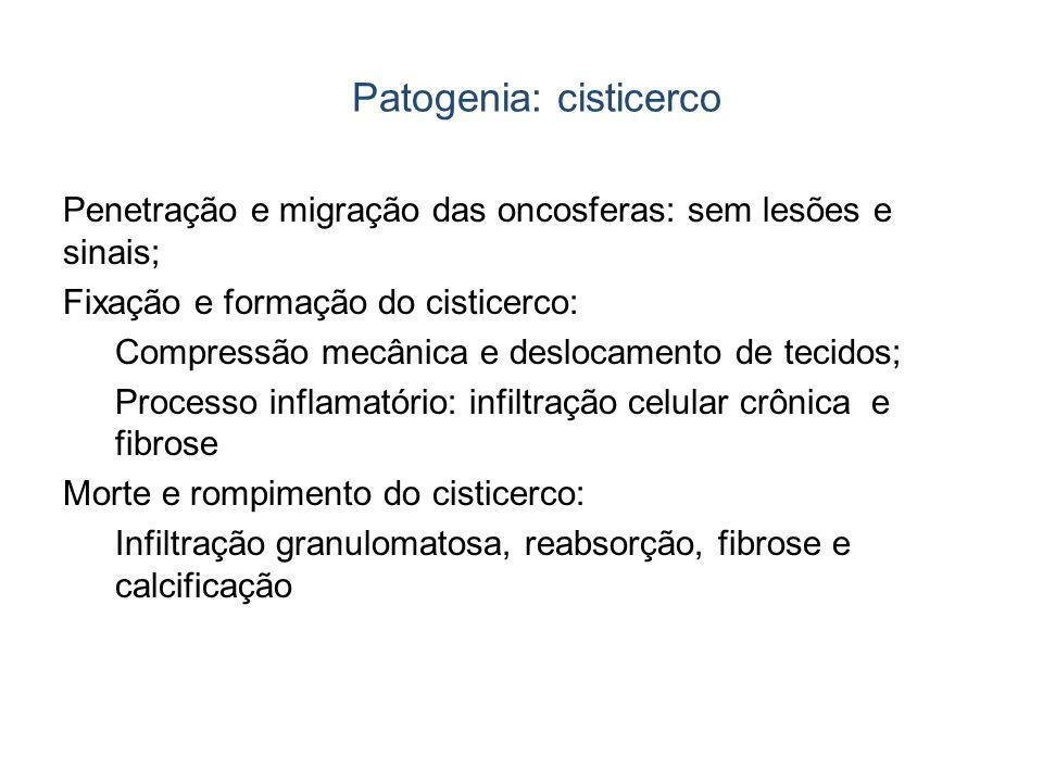 Patogenia: cisticerco