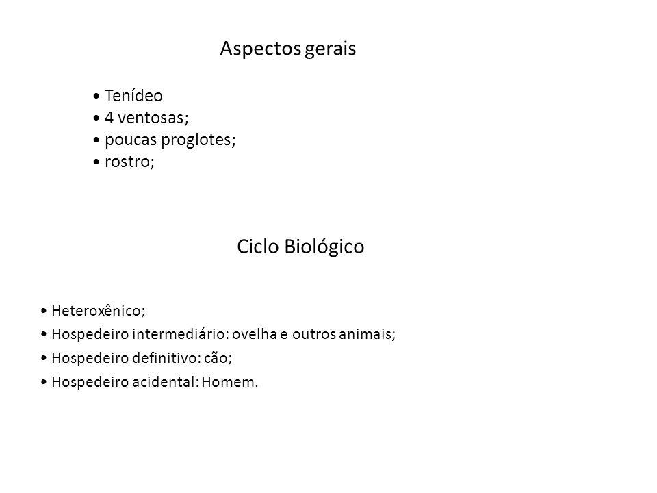 Aspectos gerais Ciclo Biológico Tenídeo 4 ventosas; poucas proglotes;