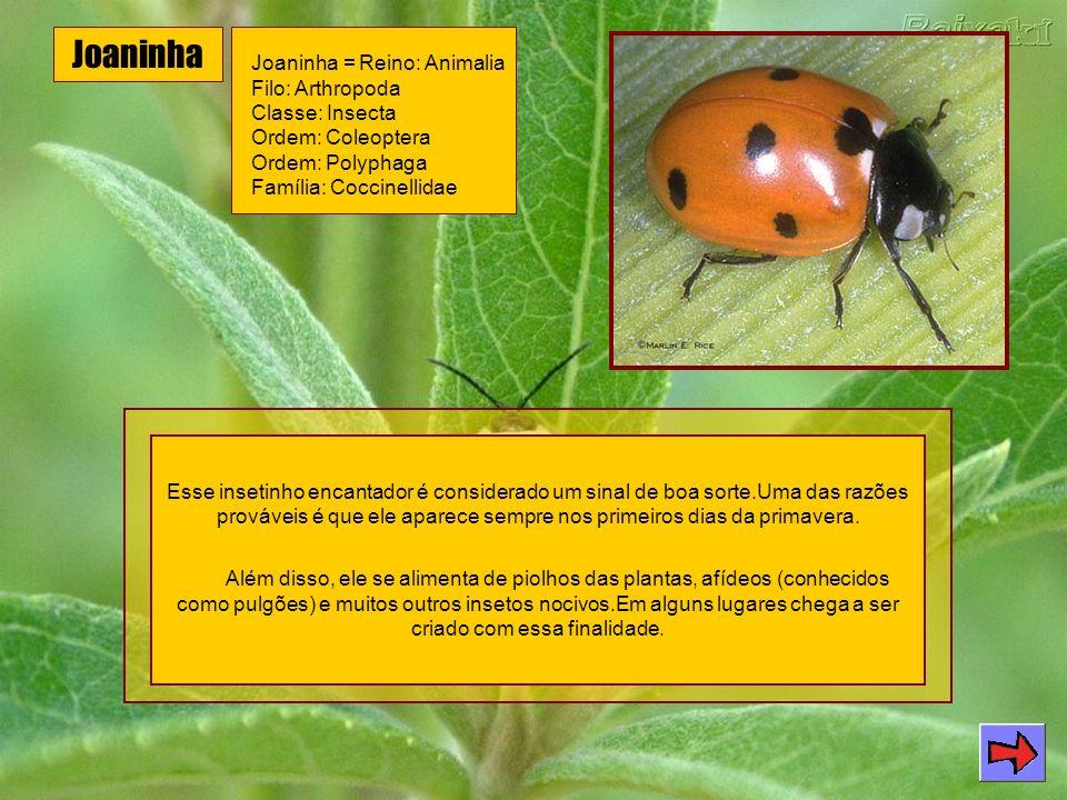 Joaninha Joaninha = Reino: Animalia Filo: Arthropoda Classe: Insecta Ordem: Coleoptera Ordem: Polyphaga Família: Coccinellidae.