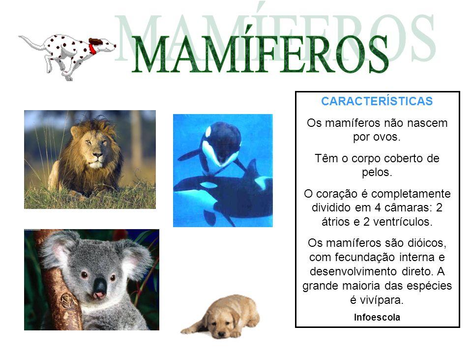 MAMÍFEROS CARACTERÍSTICAS Os mamíferos não nascem por ovos.