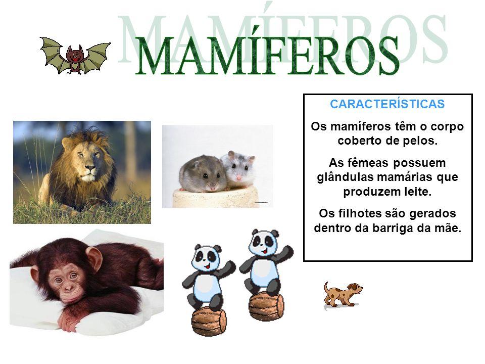 MAMÍFEROS CARACTERÍSTICAS Os mamíferos têm o corpo coberto de pelos.