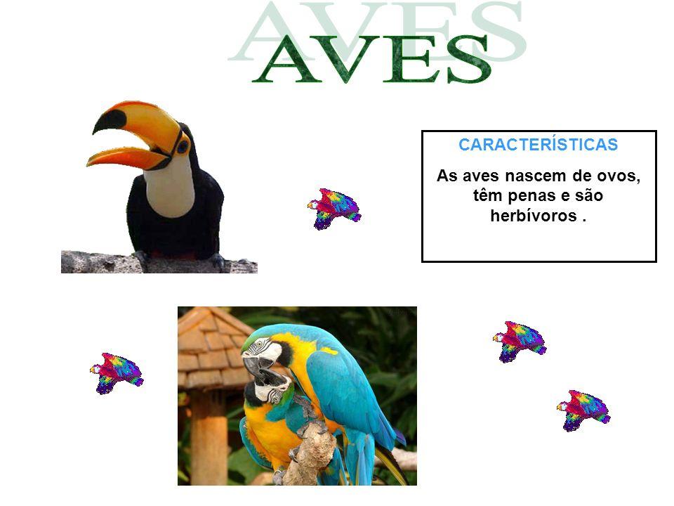 As aves nascem de ovos, têm penas e são herbívoros .