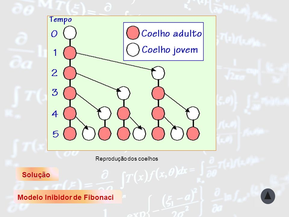 Modelo Inibidor de Fibonaci