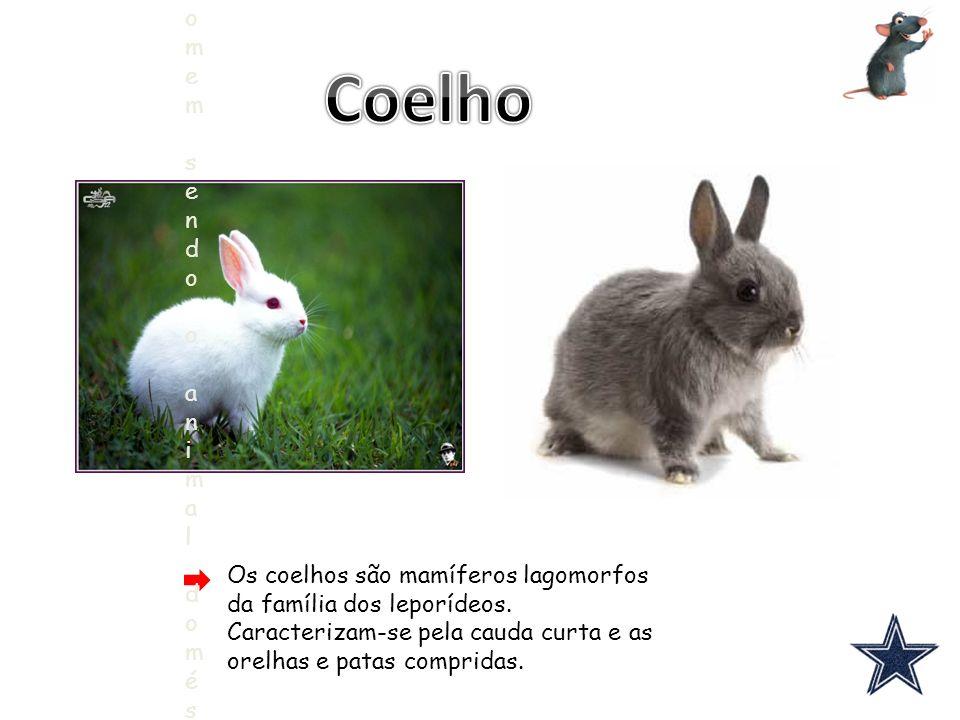 Coelho Os coelhos são mamíferos lagomorfos da família dos leporídeos. Caracterizam-se pela cauda curta e as orelhas e patas compridas.