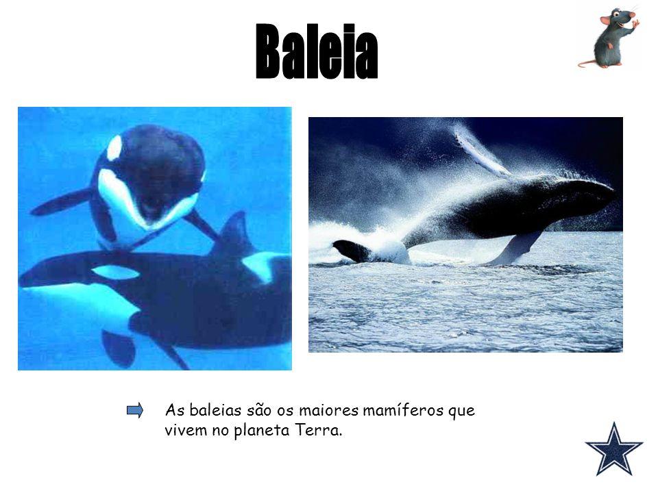 Baleia As baleias são os maiores mamíferos que vivem no planeta Terra.