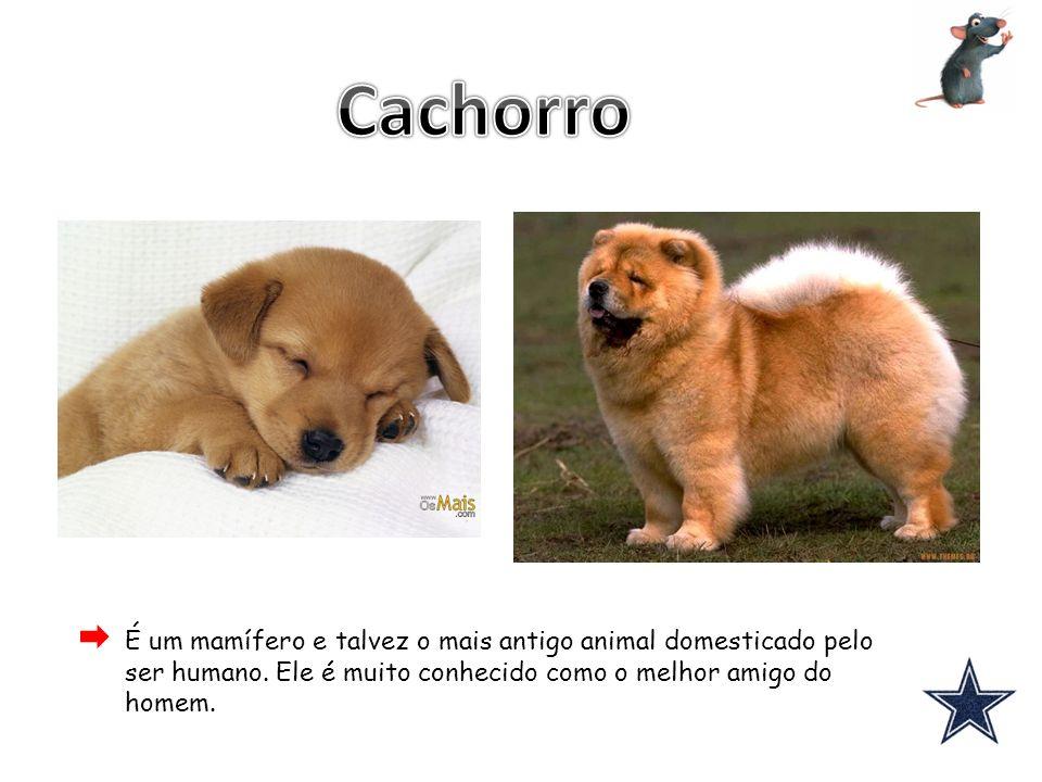 Cachorro É um mamífero e talvez o mais antigo animal domesticado pelo ser humano.