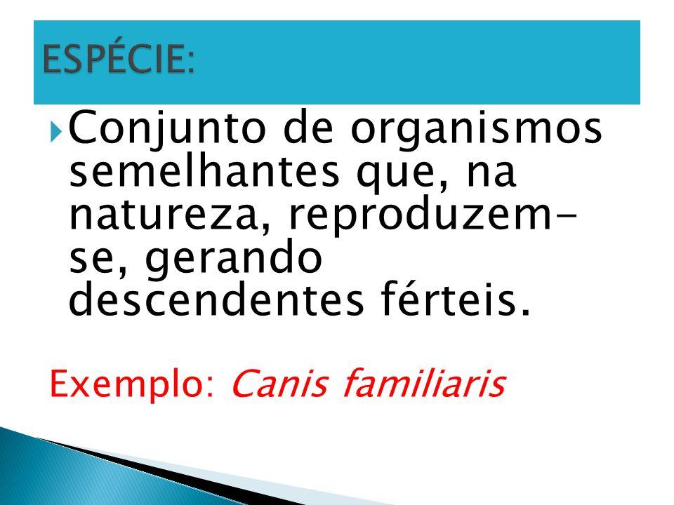 ESPÉCIE: Conjunto de organismos semelhantes que, na natureza, reproduzem- se, gerando descendentes férteis.