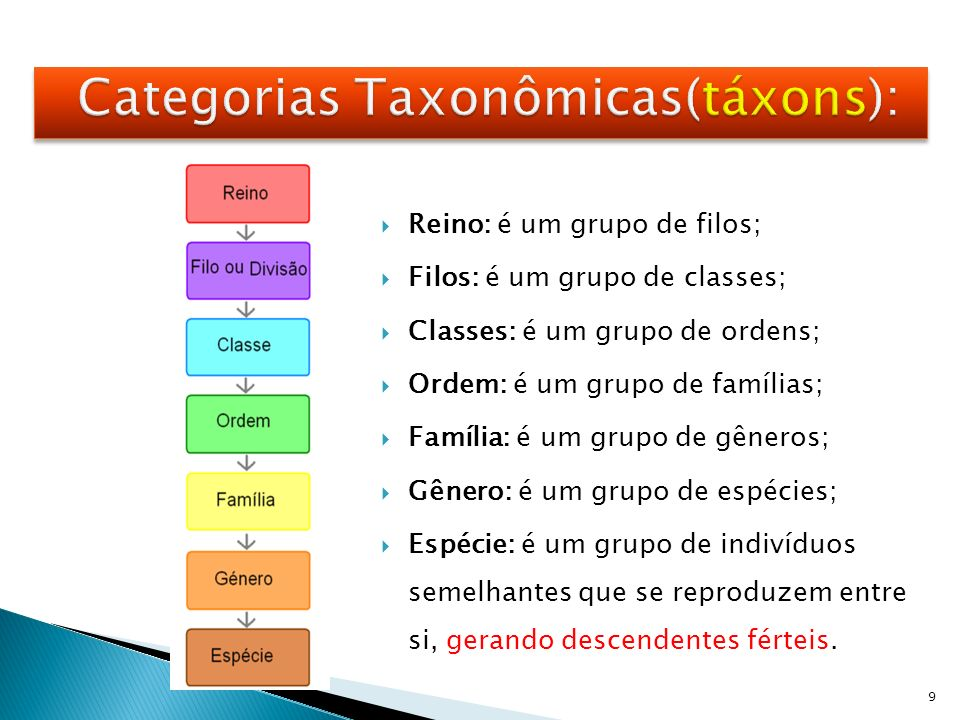 Categorias Taxonômicas(táxons):