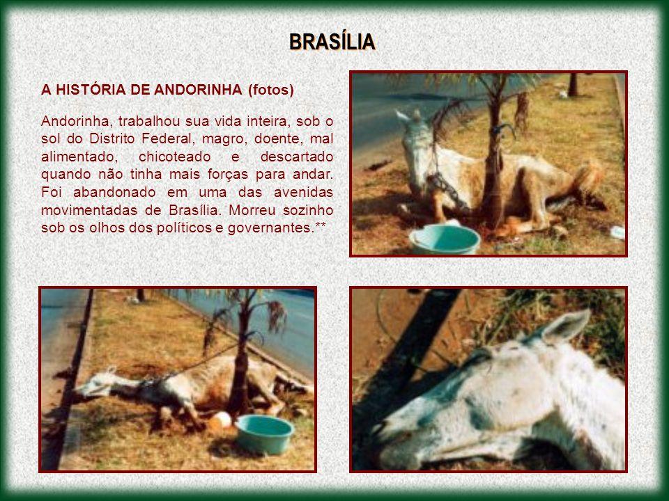 BRASÍLIA A HISTÓRIA DE ANDORINHA (fotos)