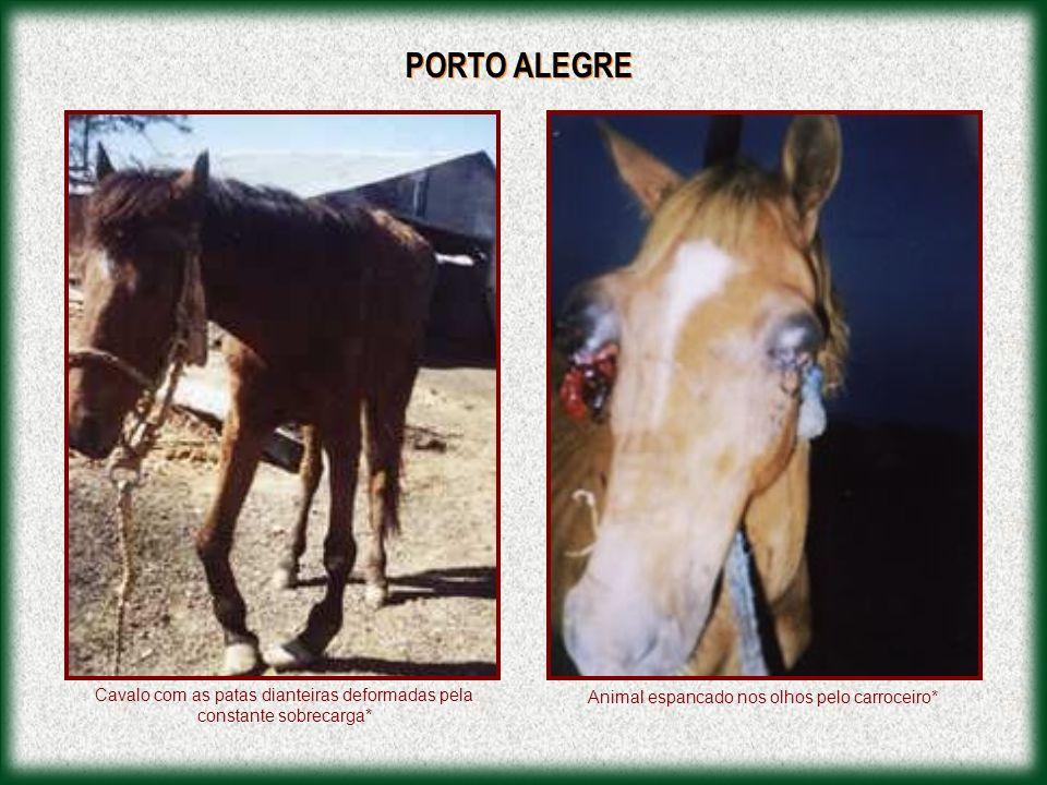 PORTO ALEGRE Cavalo com as patas dianteiras deformadas pela constante sobrecarga* Animal espancado nos olhos pelo carroceiro*