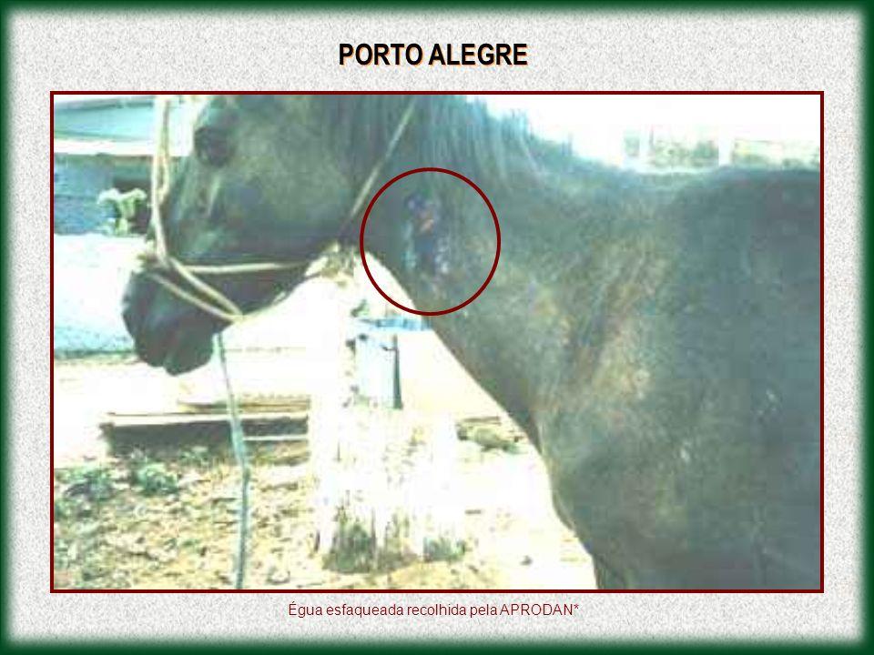 PORTO ALEGRE Égua esfaqueada recolhida pela APRODAN*