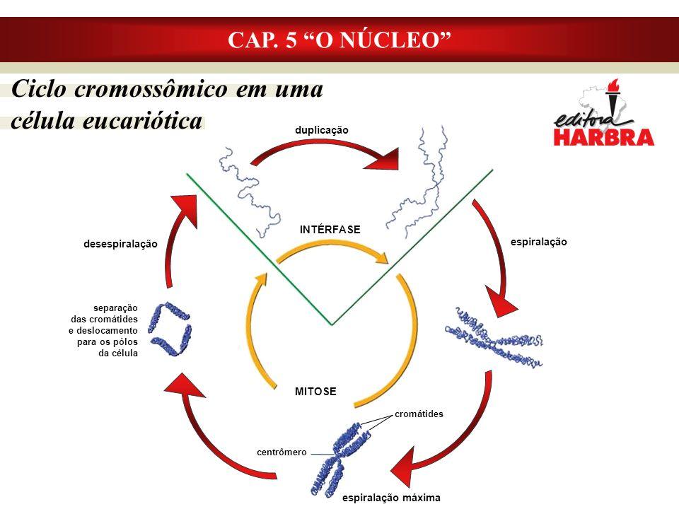 Ciclo cromossômico em uma célula eucariótica