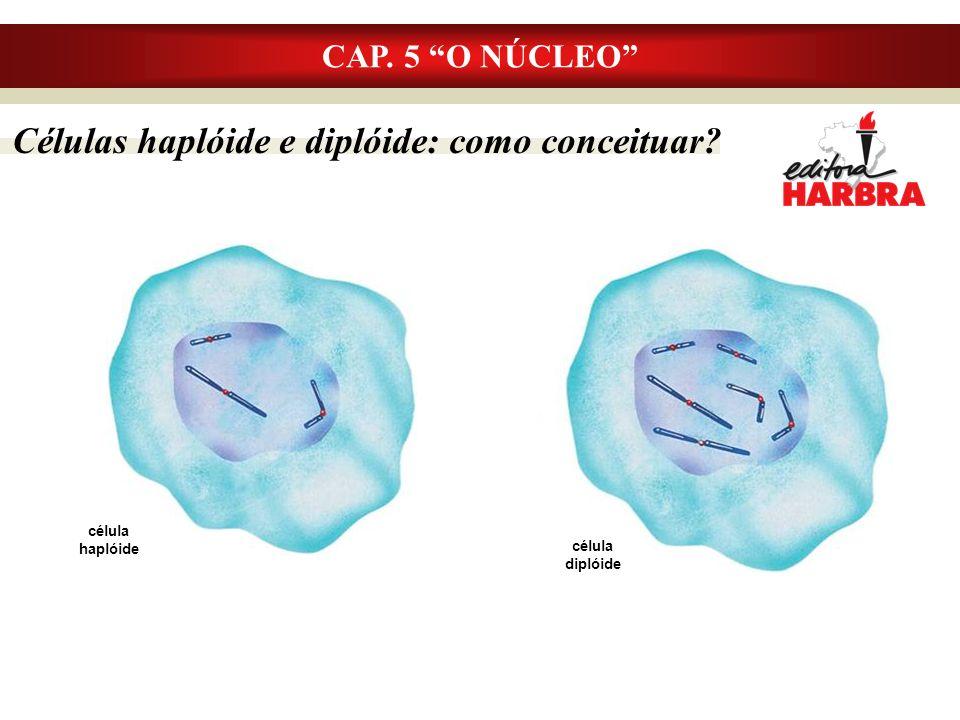 Células haplóide e diplóide: como conceituar