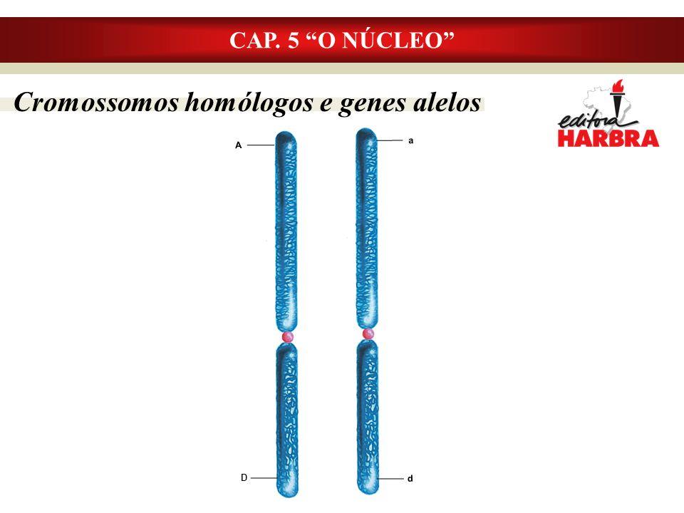 Cromossomos homólogos e genes alelos