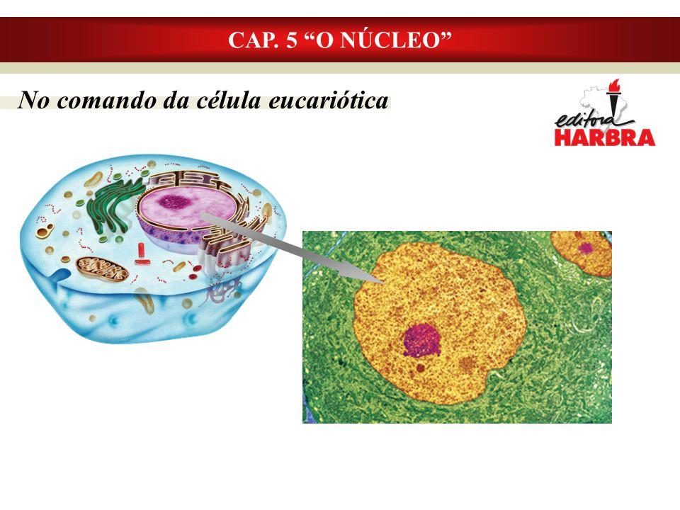 No comando da célula eucariótica
