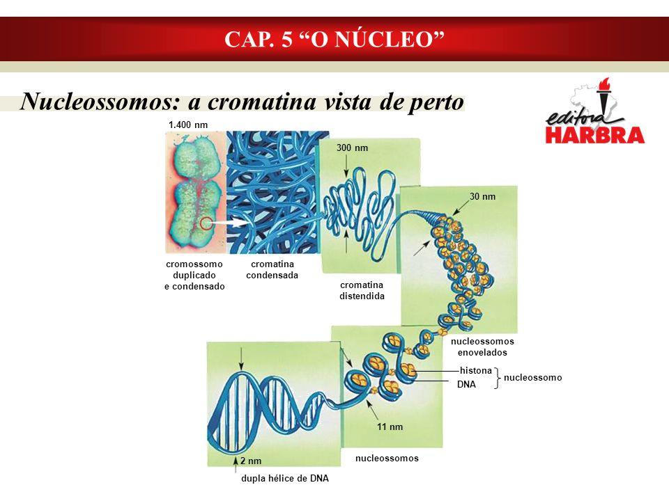 Nucleossomos: a cromatina vista de perto