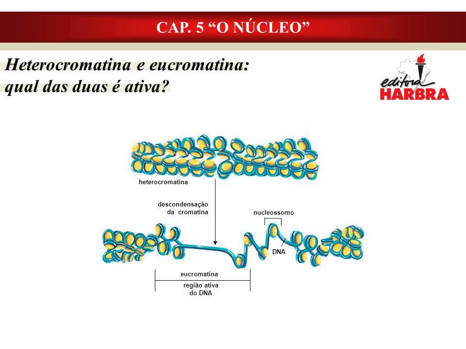 Heterocromatina e eucromatina: qual das duas é ativa
