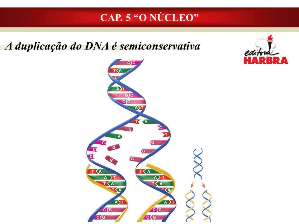 A duplicação do DNA é semiconservativa