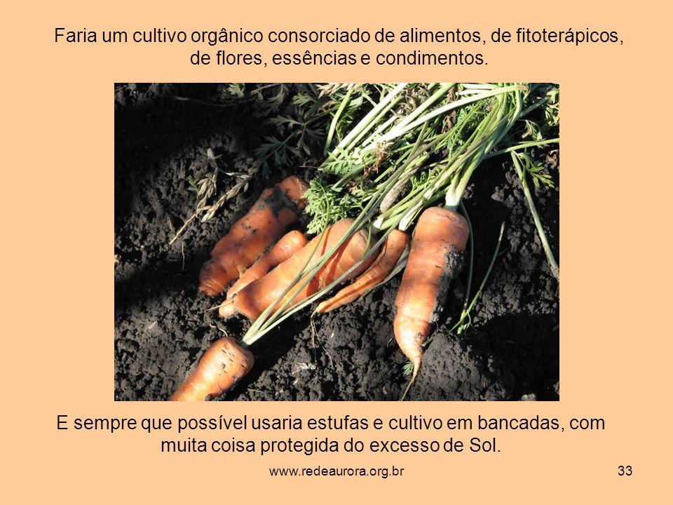 Faria um cultivo orgânico consorciado de alimentos, de fitoterápicos, de flores, essências e condimentos.