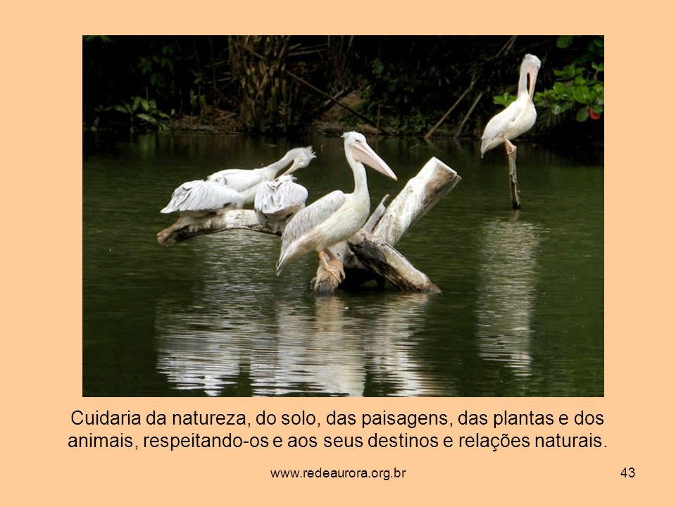 Cuidaria da natureza, do solo, das paisagens, das plantas e dos animais, respeitando-os e aos seus destinos e relações naturais.