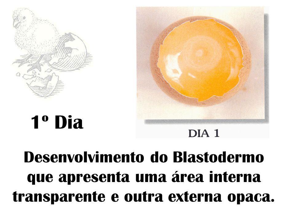 1º Dia Desenvolvimento do Blastodermo que apresenta uma área interna transparente e outra externa opaca.