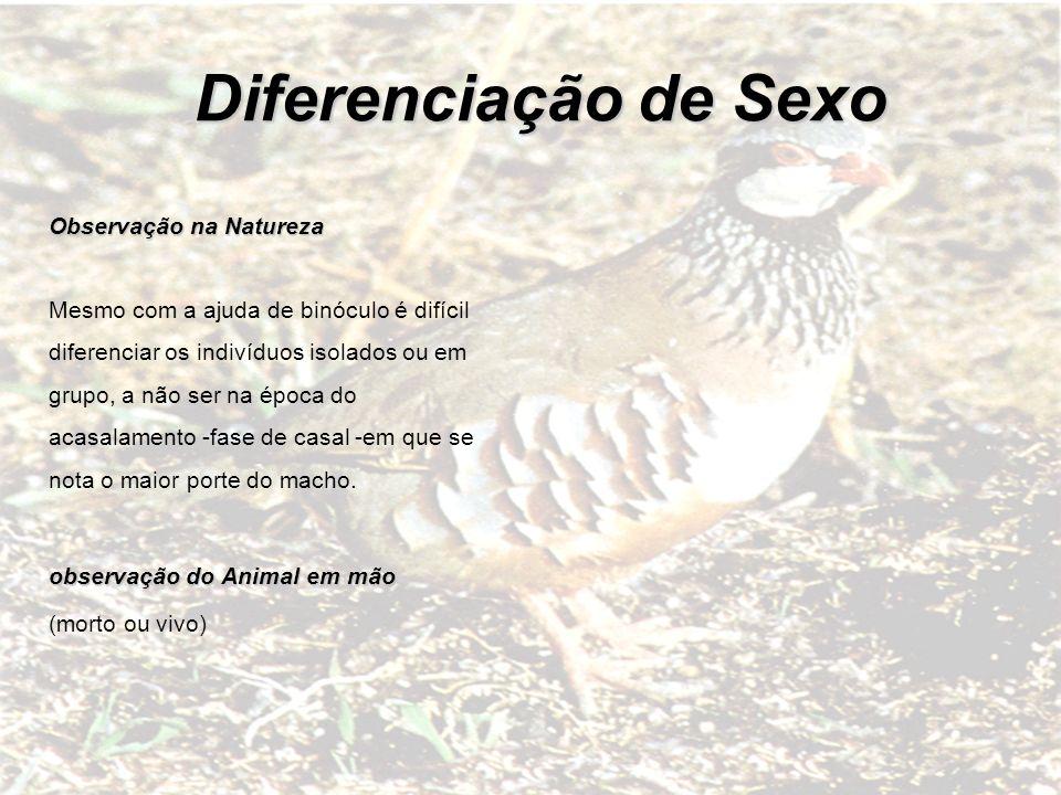 Diferenciação de Sexo Observação na Natureza
