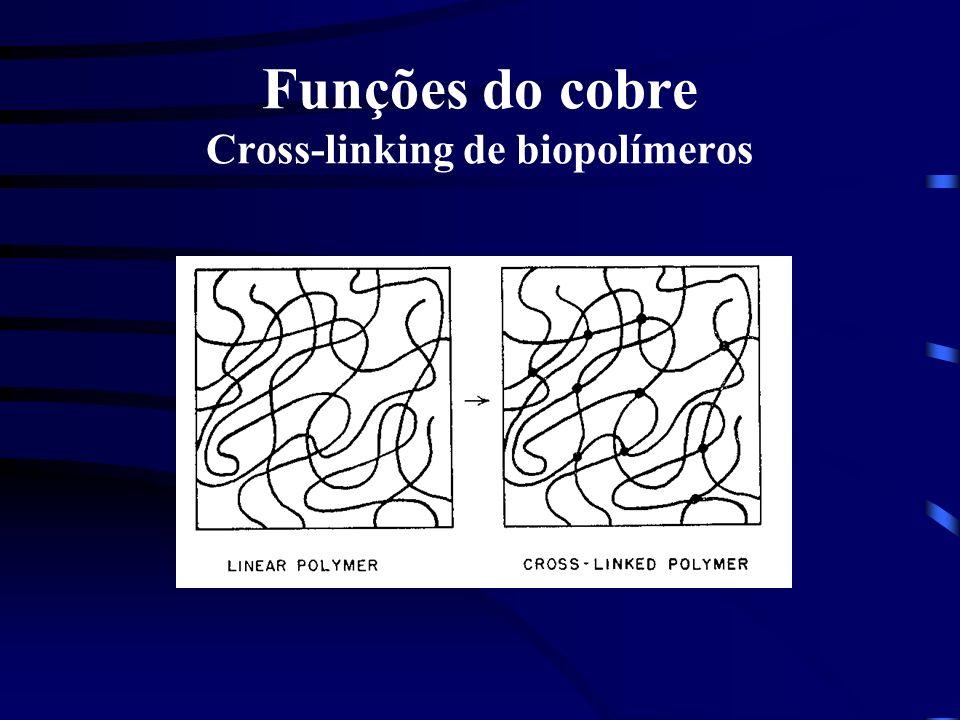 Funções do cobre Cross-linking de biopolímeros