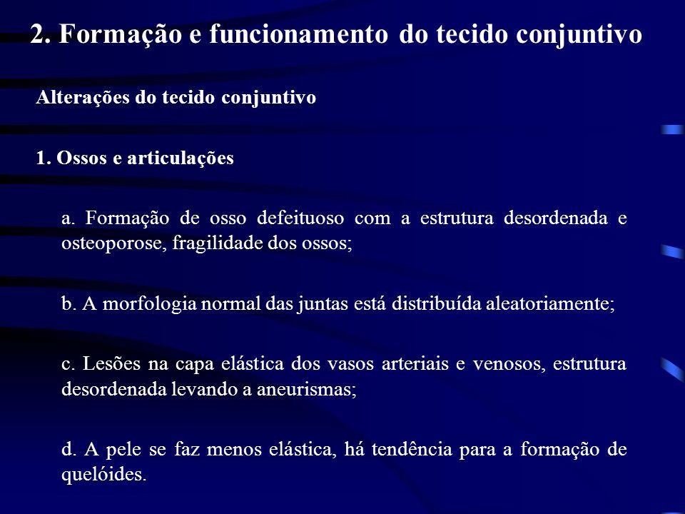 2. Formação e funcionamento do tecido conjuntivo