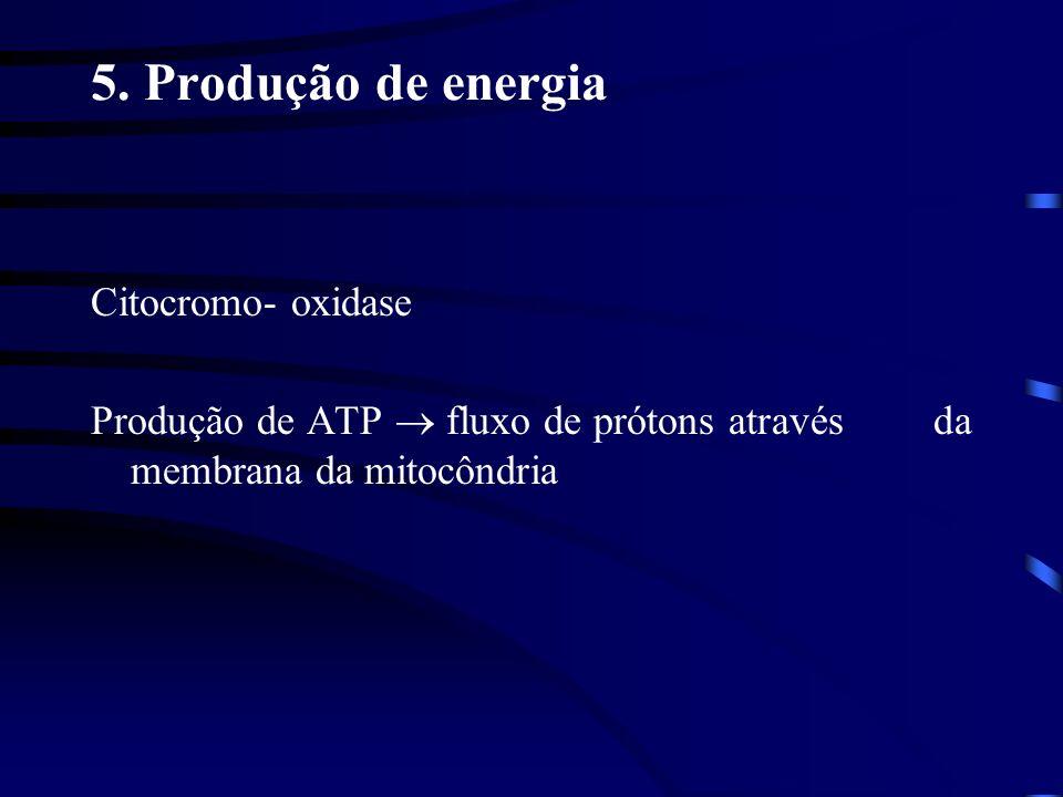 5. Produção de energia Citocromo- oxidase