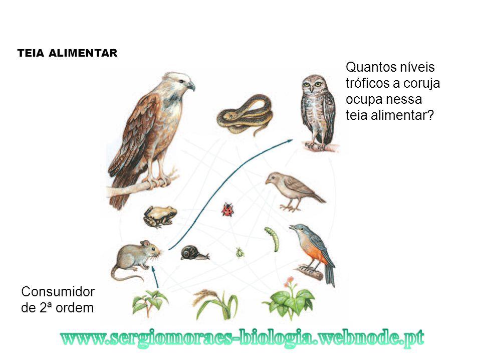 TEIA ALIMENTAR Quantos níveis tróficos a coruja ocupa nessa teia alimentar Consumidor de 2ª ordem.