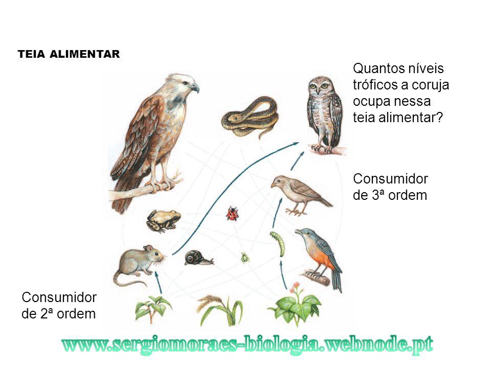 TEIA ALIMENTAR Quantos níveis tróficos a coruja ocupa nessa teia alimentar Consumidor de 3ª ordem.