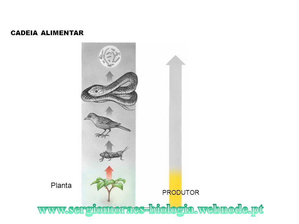 CADEIA ALIMENTAR Planta PRODUTOR www.sergiomoraes-biologia.webnode.pt
