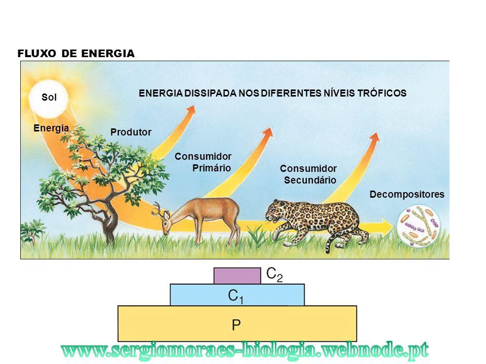 www.sergiomoraes-biologia.webnode.pt FLUXO DE ENERGIA