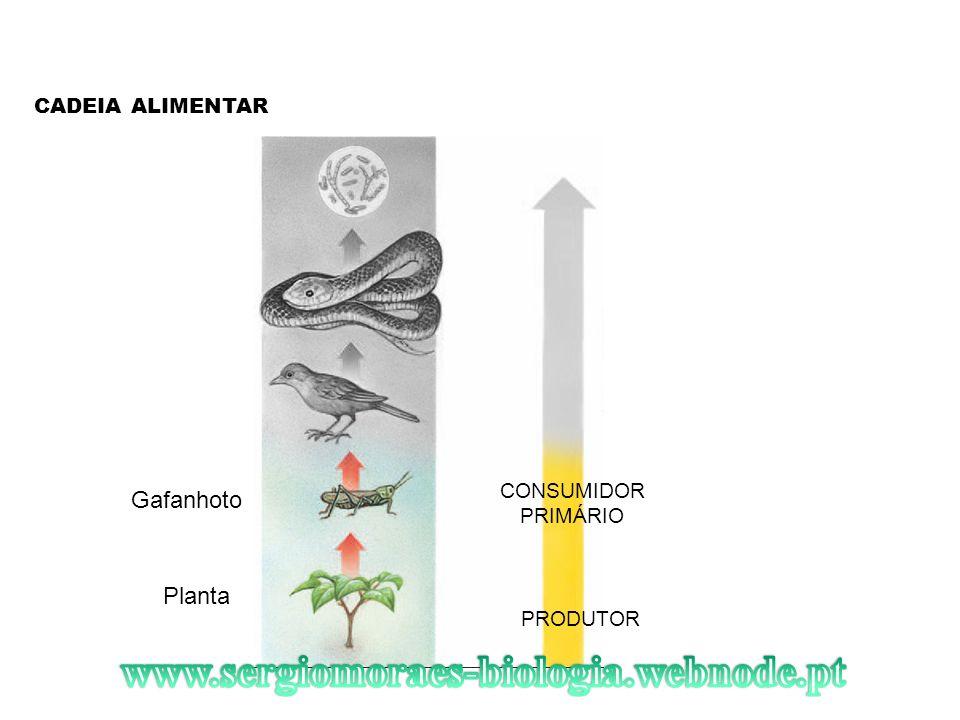 www.sergiomoraes-biologia.webnode.pt Gafanhoto Planta CADEIA ALIMENTAR
