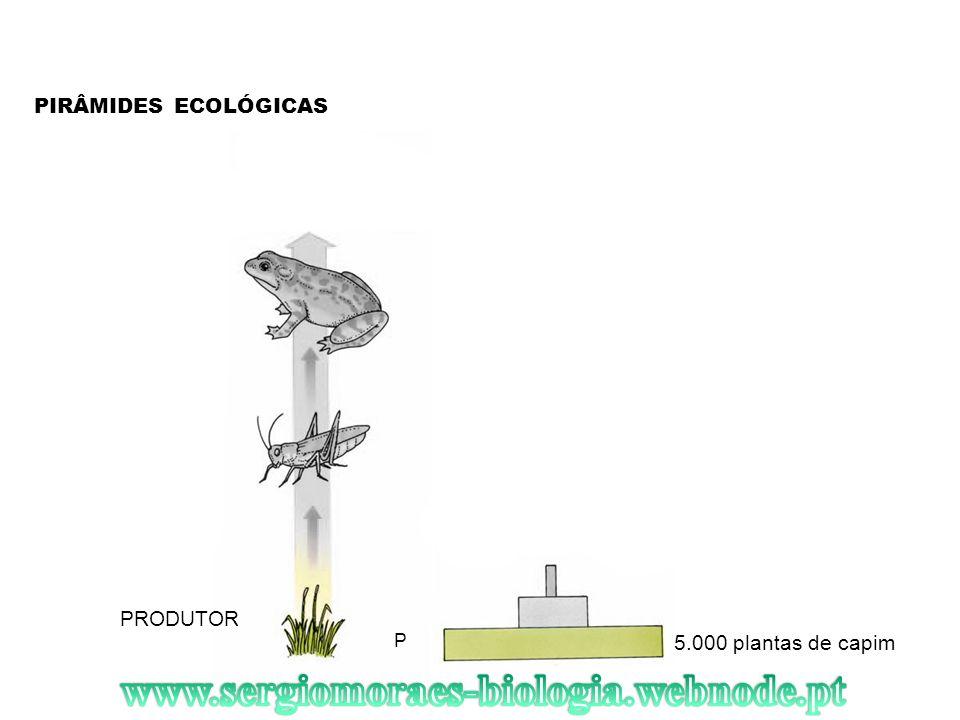 www.sergiomoraes-biologia.webnode.pt PIRÂMIDES ECOLÓGICAS PRODUTOR