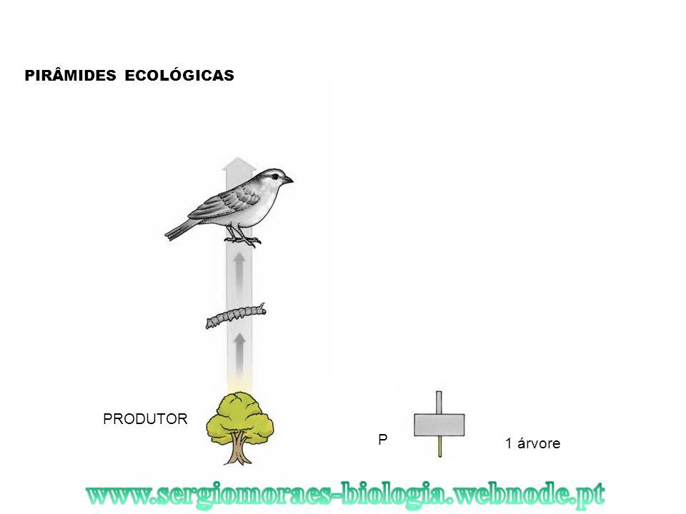www.sergiomoraes-biologia.webnode.pt PIRÂMIDES ECOLÓGICAS PRODUTOR P