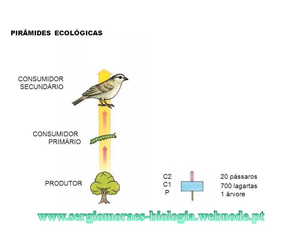 www.sergiomoraes-biologia.webnode.pt PIRÂMIDES ECOLÓGICAS