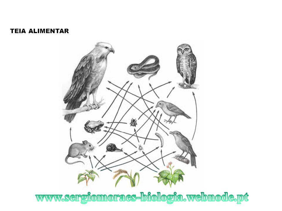 TEIA ALIMENTAR www.sergiomoraes-biologia.webnode.pt