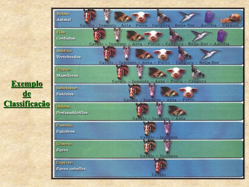 Exemplo de Classificação