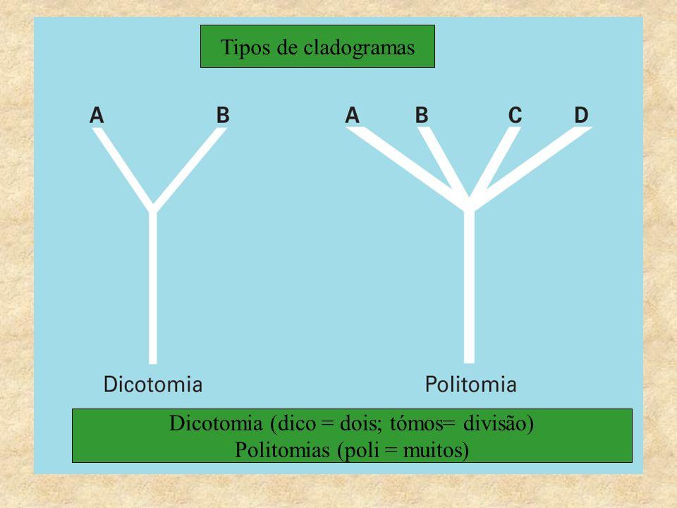 Dicotomia (dico = dois; tómos= divisão) Politomias (poli = muitos)