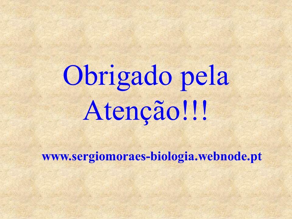 Obrigado pela Atenção!!! www.sergiomoraes-biologia.webnode.pt