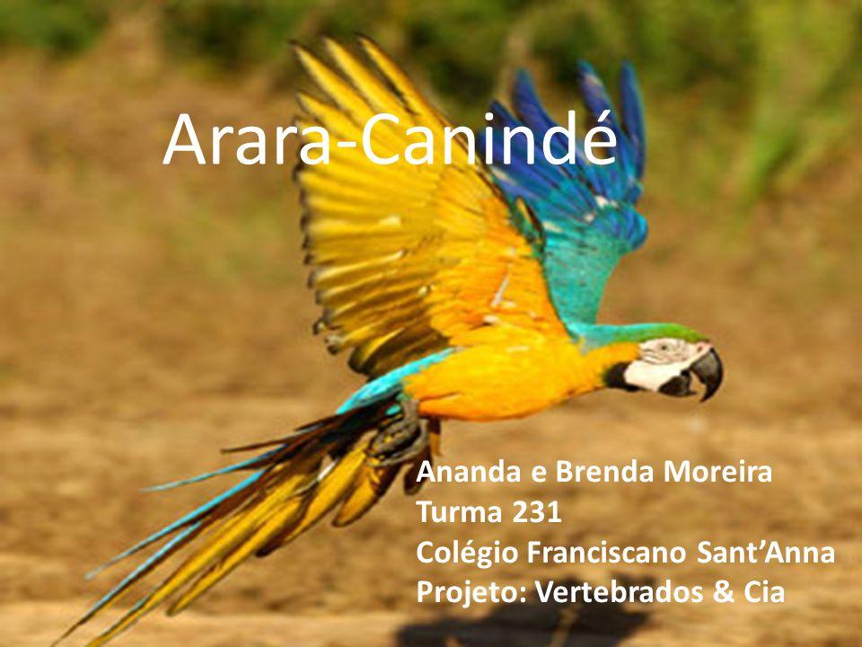Arara-Canindé Ananda e Brenda Moreira Turma 231