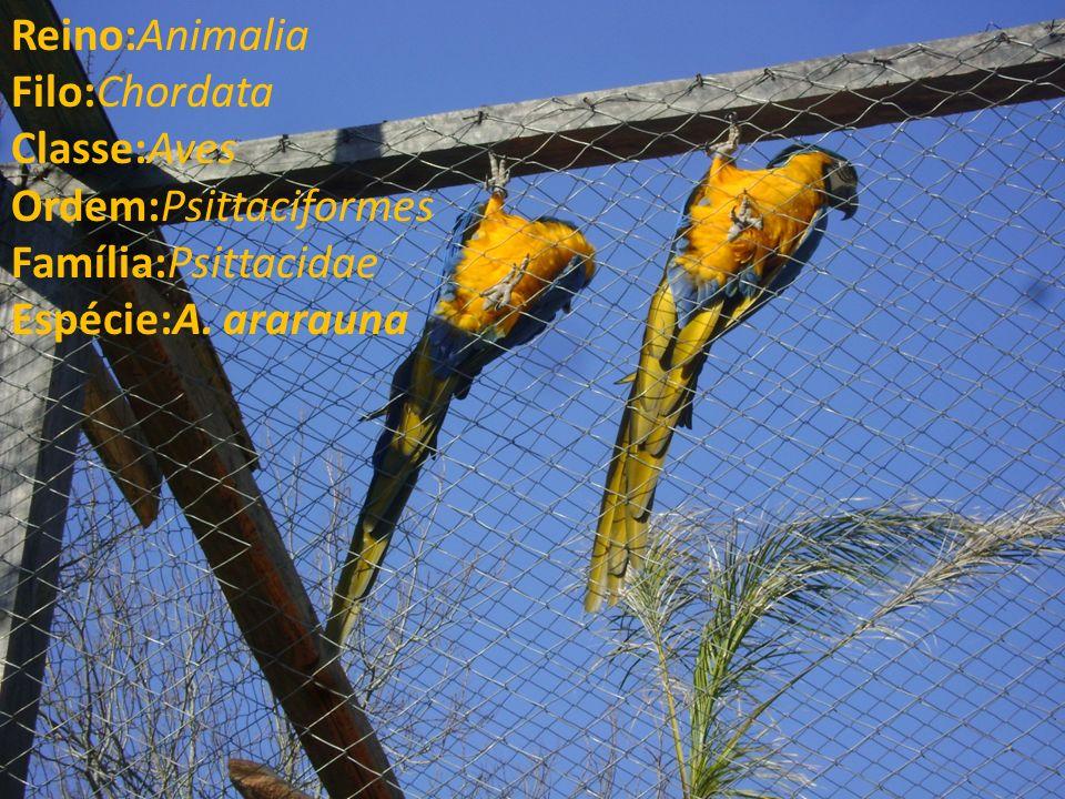 Reino:Animalia Filo:Chordata Classe:Aves Ordem:Psittaciformes Família:Psittacidae Espécie:A.