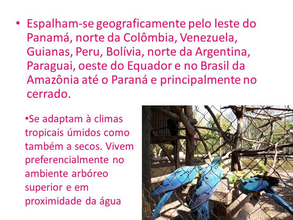 Espalham-se geograficamente pelo leste do Panamá, norte da Colômbia, Venezuela, Guianas, Peru, Bolívia, norte da Argentina, Paraguai, oeste do Equador e no Brasil da Amazônia até o Paraná e principalmente no cerrado.