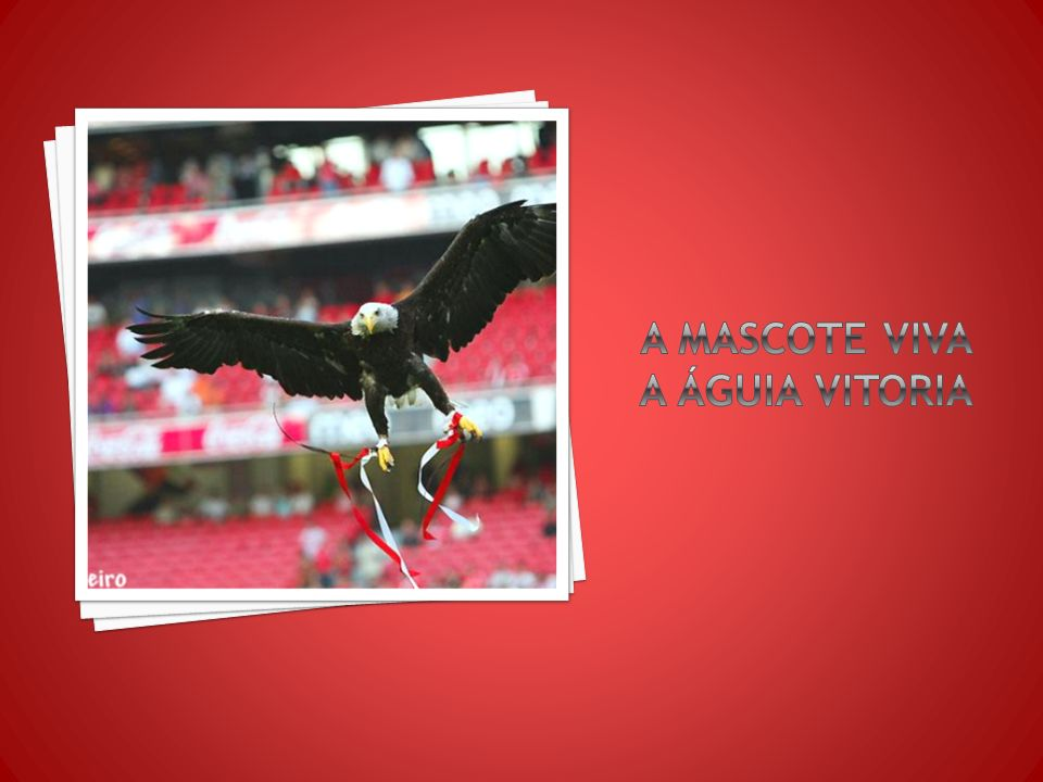 A mascote viva a águia vitoria
