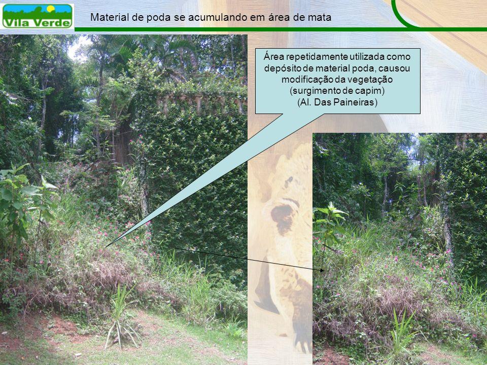 Material de poda se acumulando em área de mata