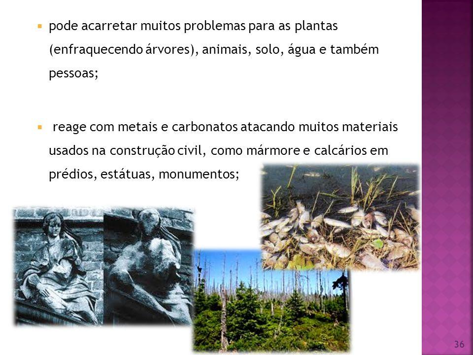 pode acarretar muitos problemas para as plantas (enfraquecendo árvores), animais, solo, água e também pessoas;