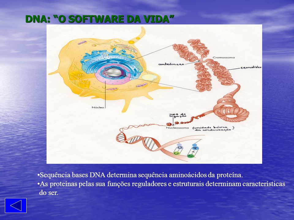 DNA: O SOFTWARE DA VIDA