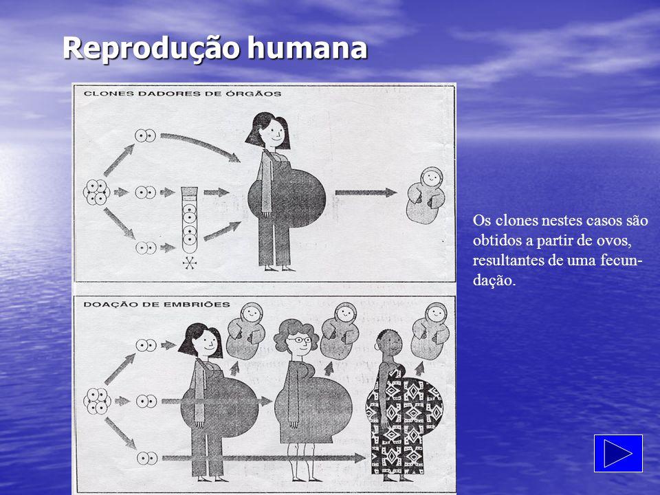 Reprodução humana Os clones nestes casos são obtidos a partir de ovos,